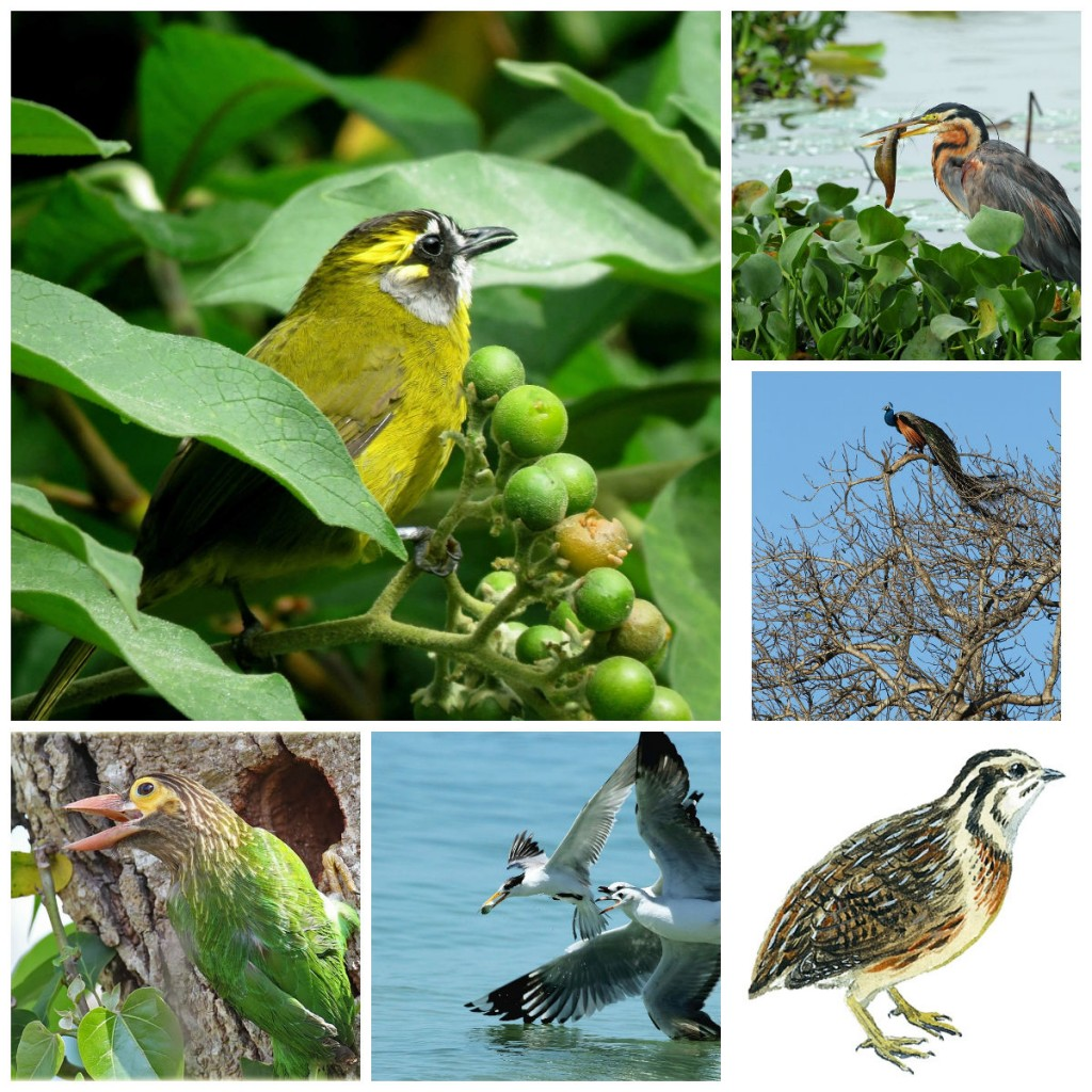 Birds of Sri Lanka scaled