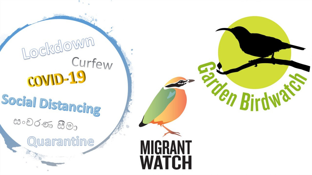 COVID, MigrantWatch and GardenBirdWatch